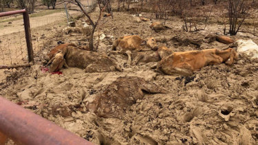 Farmers faced scenes of devastation when the flooding subsided.
