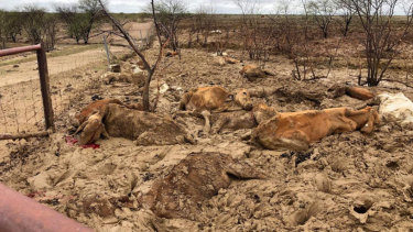 Farmers in the state's north-west have faced scenes of devastation as the flooding subsides.