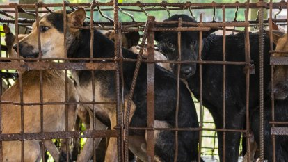 Millions of dogs and cats butchered in Asia amid disease risks: animal groups report