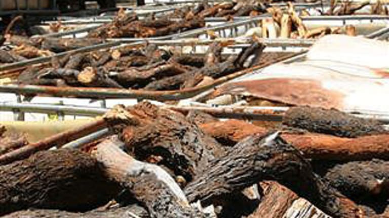 Some of the 200 tonnes of 'illegally harvested' sandalwood.