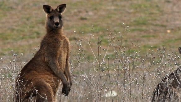 Motorcyclist dies after crash with kangaroo on Sydney motorway