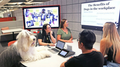 Top dogs leading the office revolution