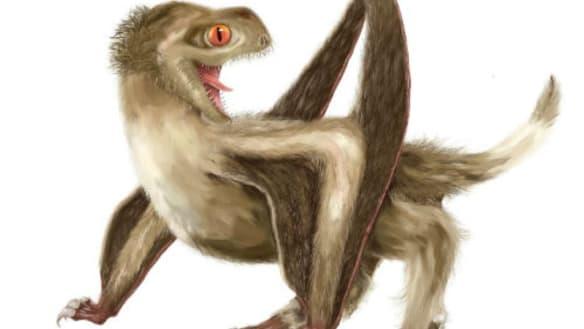 Extinct flying reptiles had rudimentary feathers