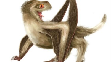 An artist's impression of a pterosaur, which had short, hair-like feathers.