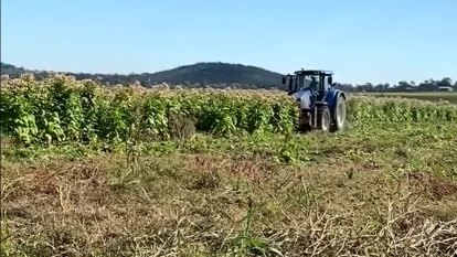 Illegal $40m tobacco-growing operation found west of Brisbane