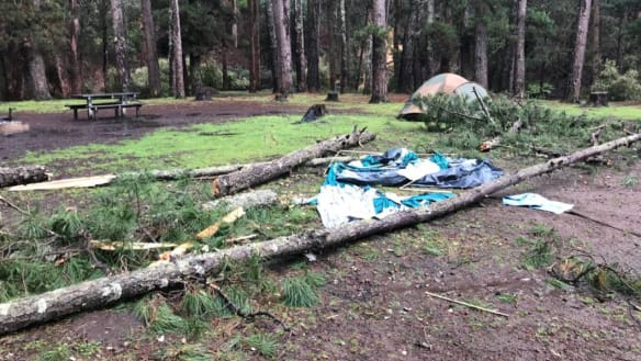 WA family injured after tree falls and crushes tent in wild weather