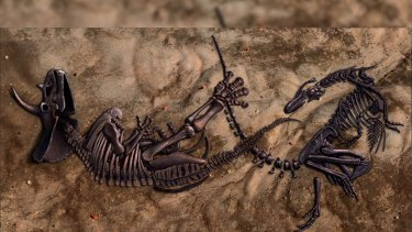 An artist's depiction of the two iconic animals locked in an apparent fight which has lasted 66 million years.