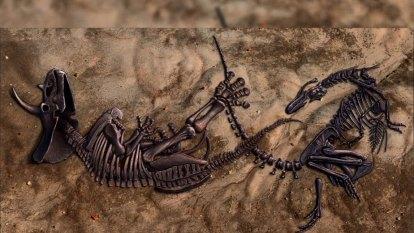 Australian scientists unlocking secrets of the Duelling Dinosaurs