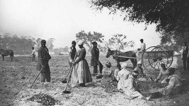 Slaves on the James Hopkinson Plantation planting sweet potatoes, circa 1862, in South Carolina.