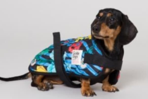 Gorman will design clothes for dogs, but not plus size women