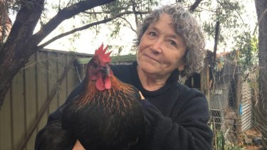 Joanna Pickford with her hen Goosie Loosie at her home in East Richmond. PFAS contamination has been found in all three of her chickens' eggs.