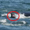 Diver almost became a whale's lunch