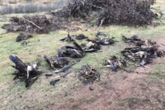 Dead birds found on a property in East Gippsland in June.