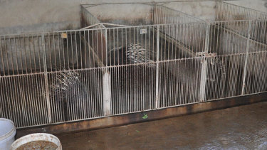 Examples of trafficked wildlife in Vietnam are detailed in the paper