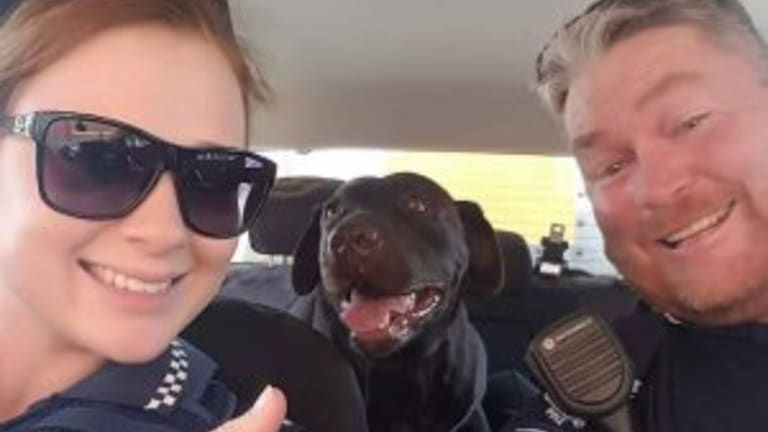 Police rescued a Labrador from a hot car in Toowoomba on Tuesday.