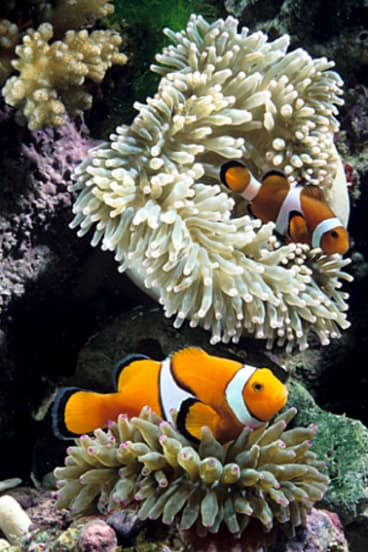 The Great Barrier Reef Foundation has raised $90 million over recent years, at least half of which was from successful grants from state and federal governments.