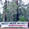 Protesters dig in to block clear-felling in South West karri forest