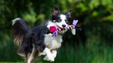 Rose-Hip Vital offers pure and natural health supplements for people, dogs and horses.