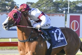 Connections believe a gelding operation could be the secret to unlocking the potential of Morethannumberone, who has won just one race from 15 starts.