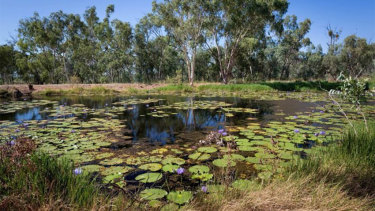 Doongmabulla Springs, south-west of the proposed Carmichael mine. Impact on this spring is at the centre of Adani's final approvals.