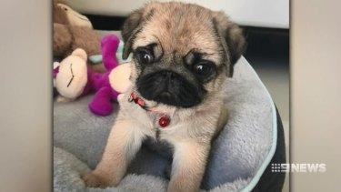 Coco the puppy.