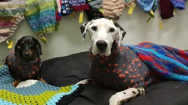 Barry with a donated jumper was posted to the rescue group's Facebook page a day before the raid.
