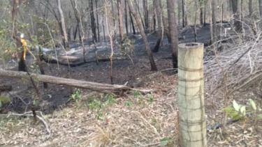 Queensland police are searching for the arsonist who lit a blaze on the Gold Coast amid the bushfire dangers.