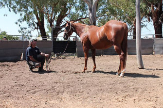 Greg Douglas is accused of a string of assaults against six women volunteering on his Peelwood horse stud.