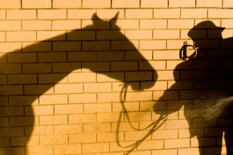 Country trainer Tony Romeo has been suspended for 12 months, nine of those months suspended for two years, for failing to provide veterinary treatment to three horses in his care.