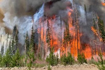Conditions leading up to this year's Canadian fires were similar to those of the Australian 2019-20 season.