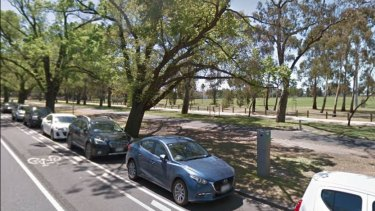 A Google image from 2017 shows the tree before it fell, killing a woman on Monday.