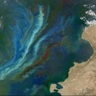 Could artificial algae blooms help stop global warming?