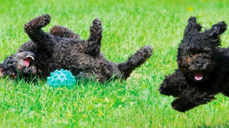 Dogs can teach us to be far more playful, so get on it.