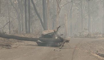 A car crushed by a fallen tree near Malua Bay during the Black Summer bushfires, photographed by local member and Transport Minister Andrew Constance.