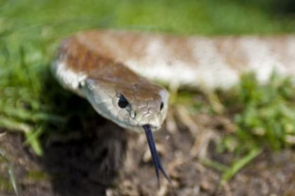 What to do if you see a snake (and here's how to avoid them)
