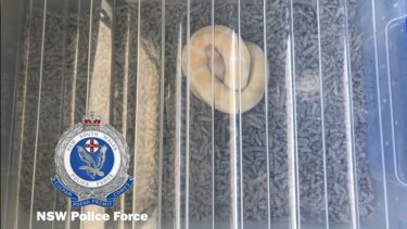 Snakes were also seized and two people were charged with trafficking offences.