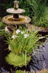 Empty and refill birdbaths at least once a week to prevent mosquitoes breeding.