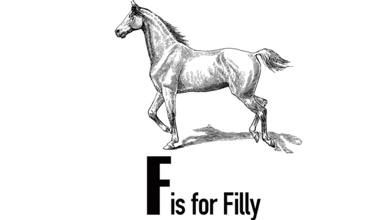 Not to be confused with a colt.