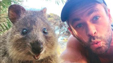 Chris Hemsworth's quokka selfie has gone global.