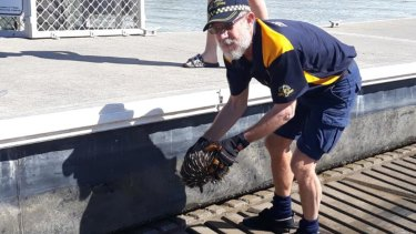 Coast Guard comes to the rescue to save echidna stranded on pontoon