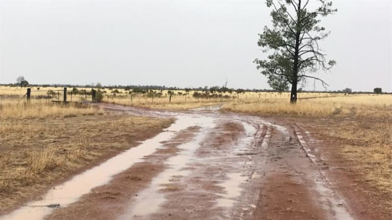 More than 20mm of rain fell overnight at Simon Maller's property, 80km north of St George in southern Queensland.
