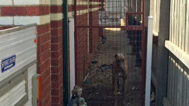 9 News reports another greyhound was seen on the property behind a fence warning others to 'beware of the dog'.