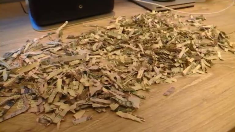 The cash was put through a shredder and meticulously recovered by Leo's parents.