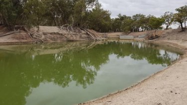 Blue-green algae on the Darling River at Pooncarie in far-western NSW.