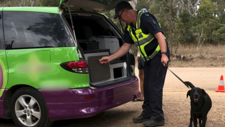 Police using a detective dog search cars at the Rainbow Serpent Festival for drugs.