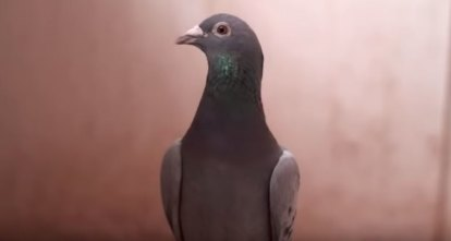 Now, about that $2 million pigeon: why we should pay at least respect