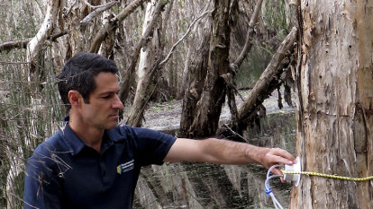 Scientists discover methane-eating microbes on wetland trees