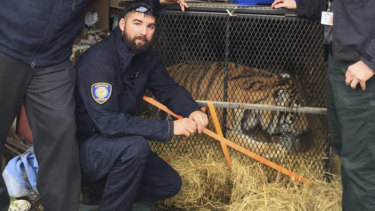 Control officers from animal shelter BARC Houston with a tiger that was found in an abandoned house in the city.