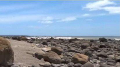 Landslide scatters bones across beach in New Zealand