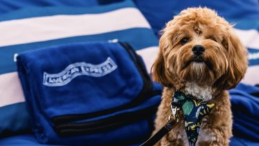 Dogs are welcome at any screening at the open air cinemas on the Patrick White Lawns alongside the National Library.